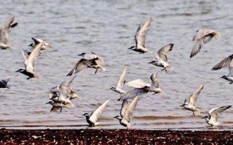 Bengaluru: Pollution, dwindling tree cover driving away migratory birds