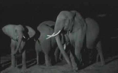 NATURE  | Unforgettable Elephants |  Elephant is Born | PBS