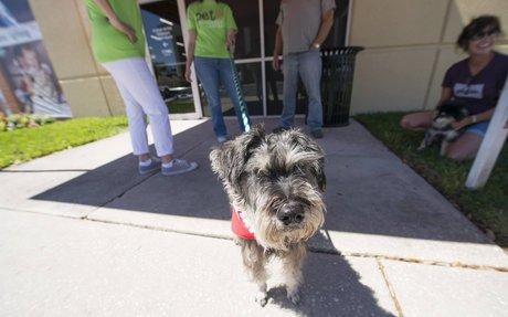 Dog Adoption Event | Lazydays RV Accessories & More