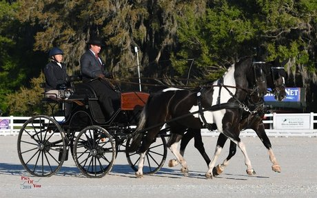 Driving: Adcox & Weber Take Division Leads in USEF Combined Driving National Championships