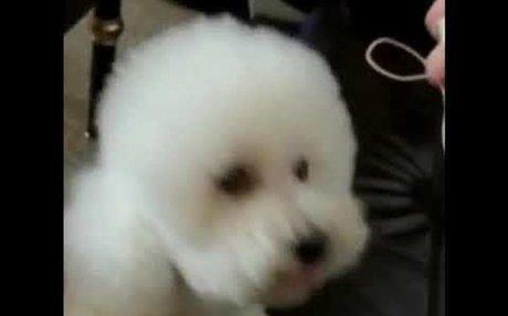 My baby Duoduo
