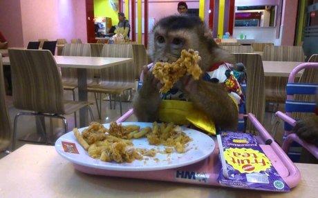 Shaki eat Fried Chicken