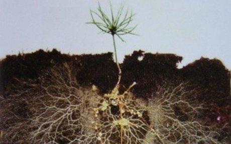 Healthy Soil Microbes, Healthy People