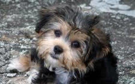 My litttle dog