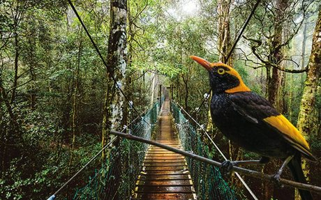 Wildlife of the lamington national park