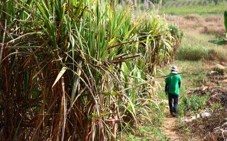 Could falling prices hinder sugar reformulation?