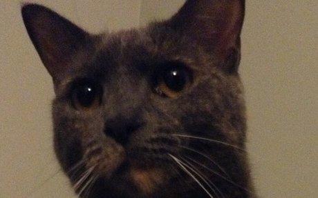 Noura - My Cat