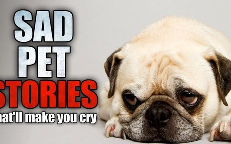 3 Sad Pet Stories That'll Make You Cry