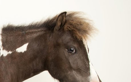 Horse | National Geographic