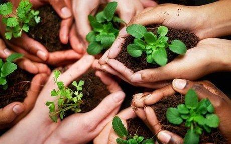How to Be Environmentally Conscious