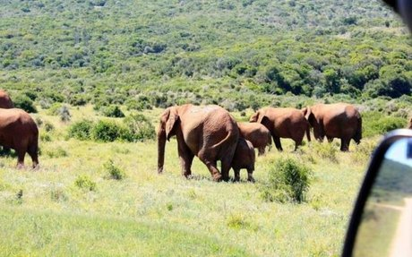Garden Route + Addo Adventure