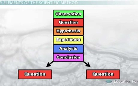 The Scientific Method: Steps, Terms and Examples