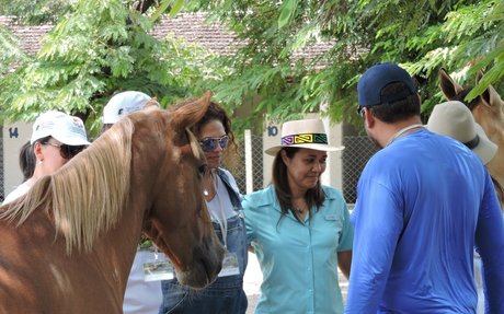 Horse Therapy: EAGALA Model Equine Assisted Psychotherapy & Learning | EAGALA Primary site