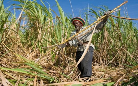 SAC: Caribbean sugar in good shape but more protection is needed