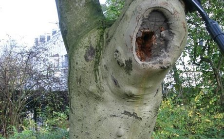 Information About Tree Grafting