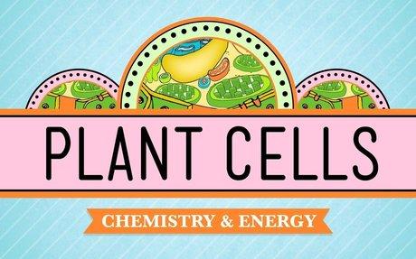 Plant Cells: Crash Course Biology #6