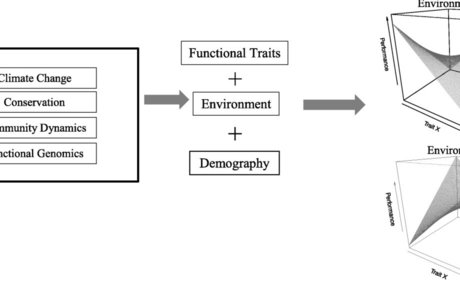 Functional perspectives on tropical tree demography and forest dynamics