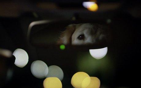 Subaru Dog Tested | Subaru Commercial | Puppy - YouTube