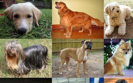 Delightful Dogs