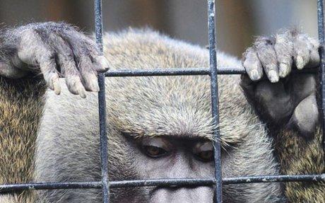 Prisiones lamentables: la realidad de los zoológicos | Blog | PETA Latino