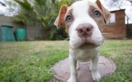 6 Unintended Consequences-Breed-Specific Legislation.