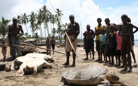 Sea Turtles: The Thriving Black Market | elink
