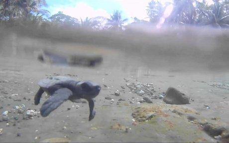 PSA: Lights off for Sea Turtles