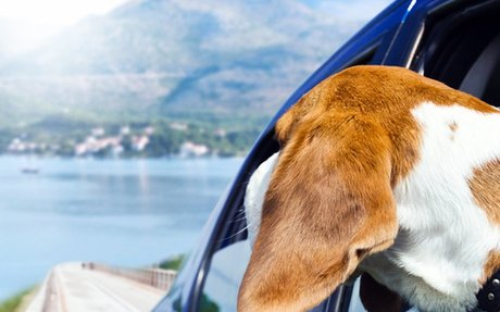 International Pet Transport