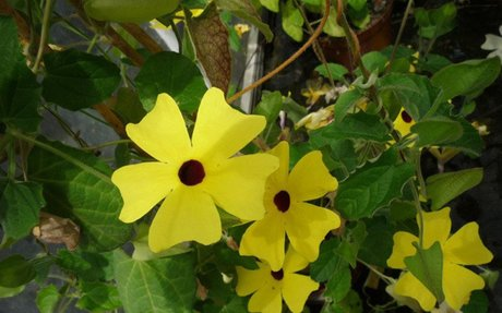Öt egynyári virág balkonra