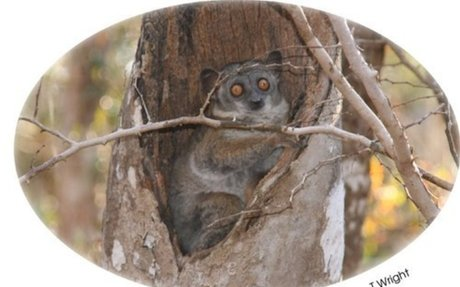 Adaptation factsheet | Fun factsheets | Kids |  Durrell Wildlife Conservation Trust