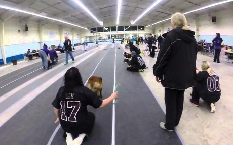 The World Of Flyball Dogs
