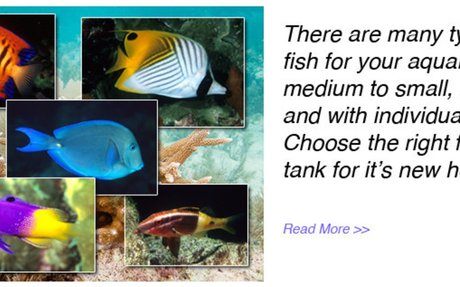 My Right Fish: Buy the Right Fish and Give it the Best Home