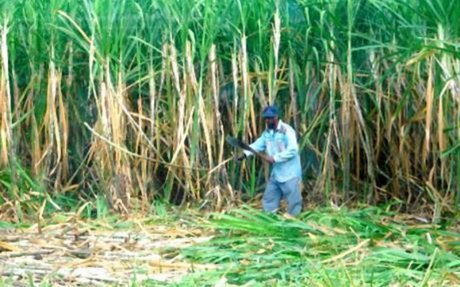 ACP sugar producers want UK to provide new incentive