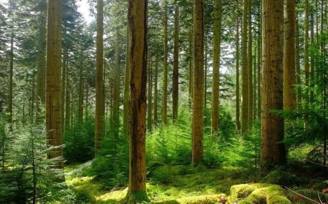 European forests and climate change
