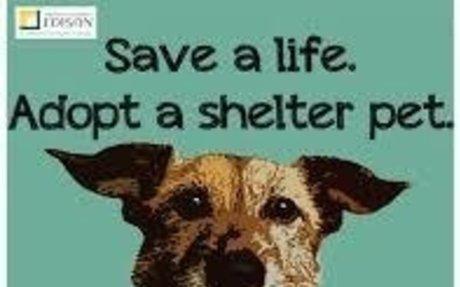 Adopt a Shelter Pet Poster