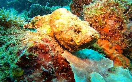 Stonefish in Mabul