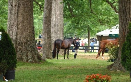 Governance: USEF,  USHJA Conducting A Town Hall Meeting At Upperville Horse Show
