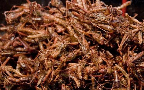 How American Cricket Farmers Raise Bugs for Us to Eat