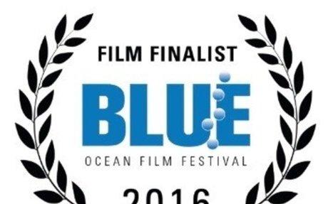 Blog - BLUE Ocean Film Festival