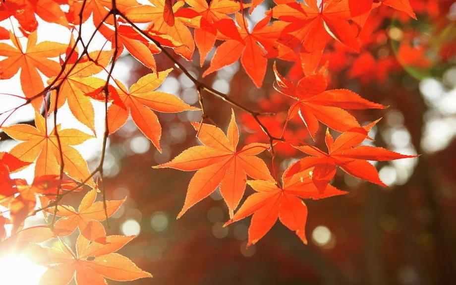 Autumn | season