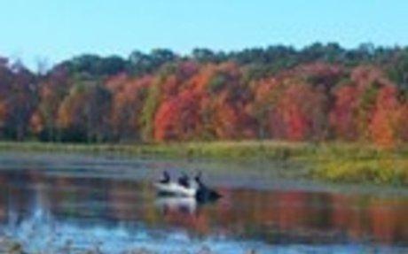 Sudbury (MA) Fishing Report, Tackle, and License Info | HookandBullet.com