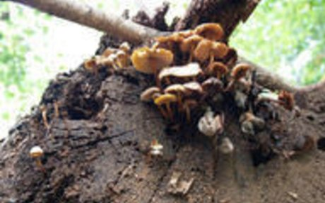 Fungi Nutrition