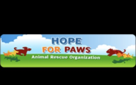 #2 - Hope For Paws Homepage