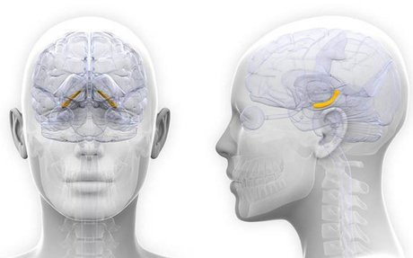 Female brain volume changes in sync with hormones, study finds
