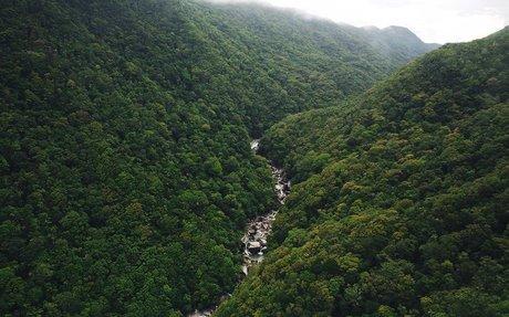 Wet Tropics Rainforest - a Prehistoric Wonder | Tropical North QLD