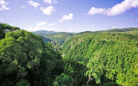 Australian Rain-forest / Skyrail
