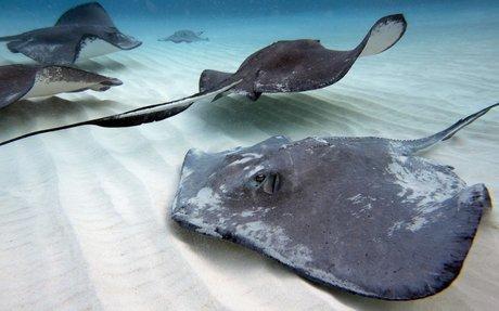 i want to swim with sting rays