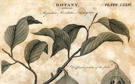 Forensic Botany Elink
