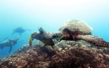 Ending sea turtle farming