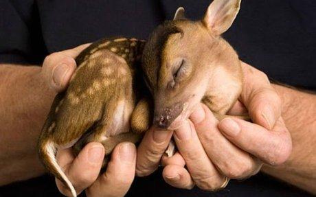 10 derechos de los animales que debes conocer y respetar